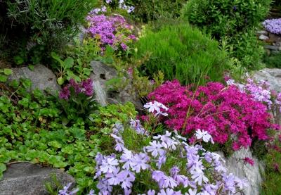 Garten gestalten: Steingartenflora by Joujou / pixelio.de