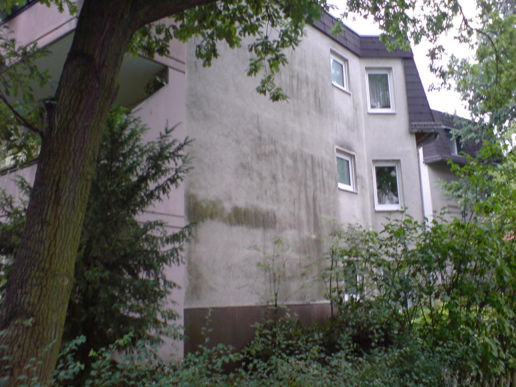 Dämmwahn - Mythos 3: Biozide für die Fassade - zur Verhinderung des Algenwachstums