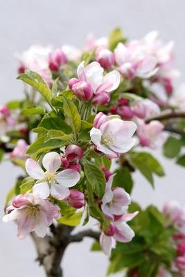 Wetter: April, April; Bild: angieconscious / pixelio.de