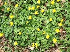 Weckruf für alle Hausbesitzer und Bauherren: Das Frühjahr steht vor der Tür