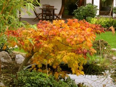 Den Garten für Herbst und Winter gestalten; Bildquelle: Karl-Heinz Liebisch / pixelio.de