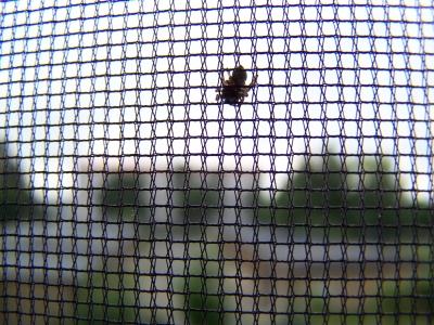 Fliegengitter als Insektenschutz; Bild: knipseline / pixelio.de