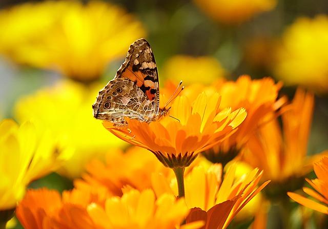 Solarleuchten setzen Lichtakzente in einem Garten, sie dienen der Umwelt und sparen Geld