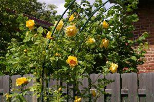 Den Garten für den Sommer vorbereiten