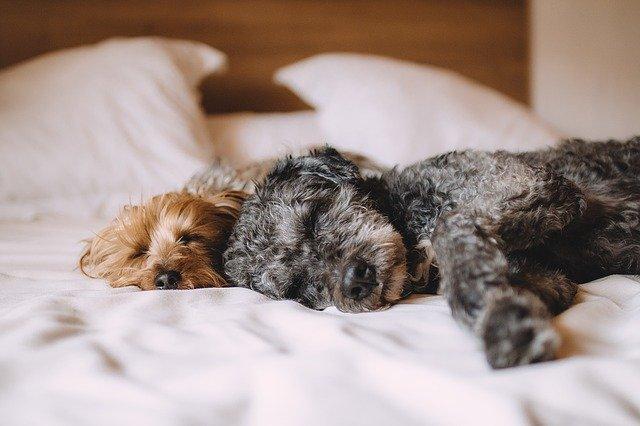 Bettenarten im Vergleich: Das sollte beachtet werden