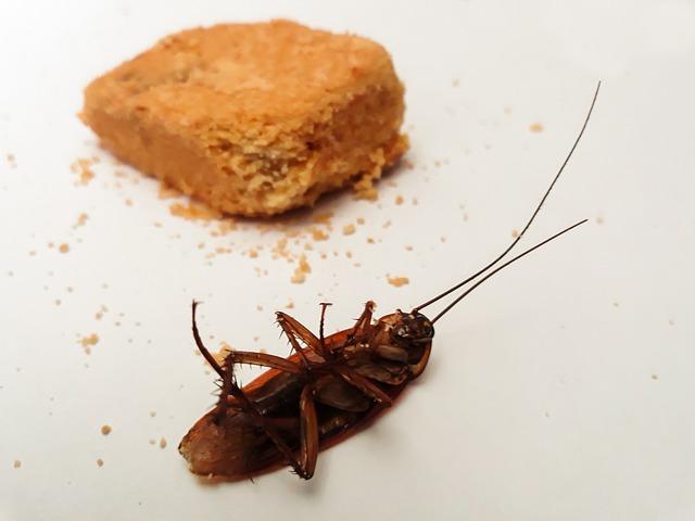 So können Hausbesitzer einen Schädlingsbefall präventiv vermeiden