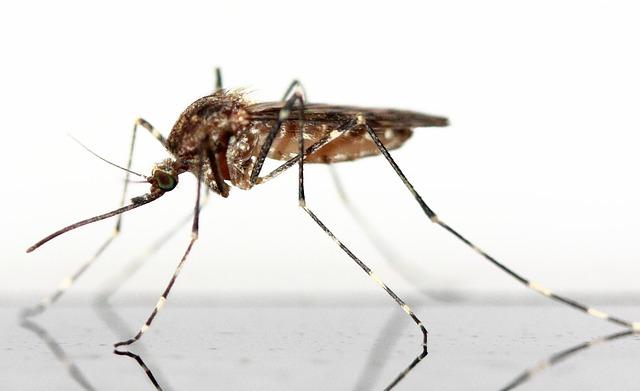 Fliegenschutzgitter - Eine einfache Lösung gegen Mücken & Co. für den entspannten