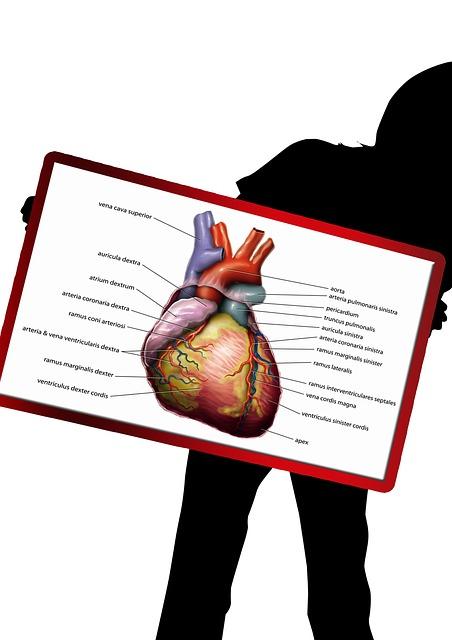 Herz und Blut – Kreislauf – System →Aufbau und Funktion