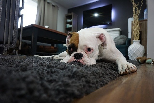 Nicht jeder Teppich passt in jeden Raum